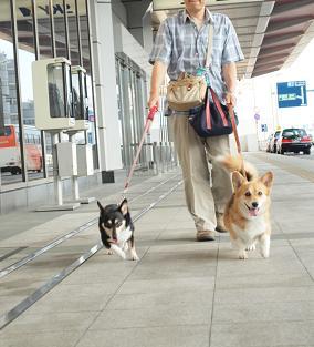 羽田空港でお散歩中