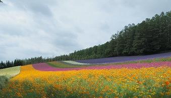 曇ってたけどお花はきれい〜