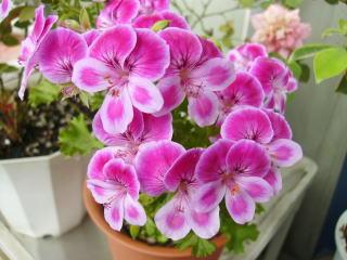 我が家のお花♪