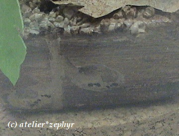 ガラスドーム作品台座拡大図 アリの巣の絵