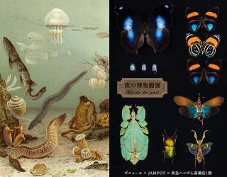 夜の博物館DM画像