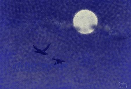 atelier*zephyr 月と鳥 デジタルイラスト