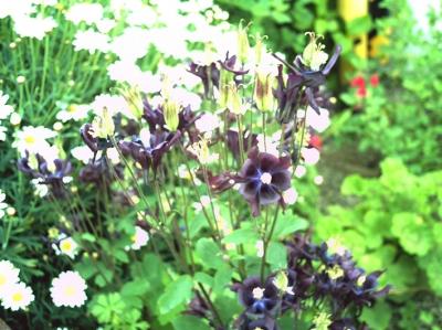 花の写真 ミックス