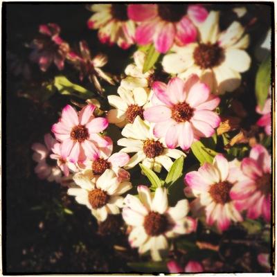 白とピンク 花