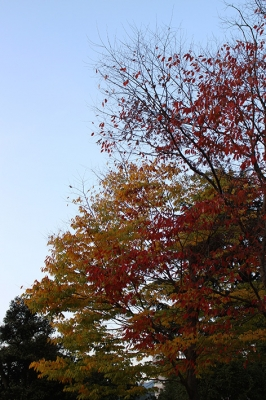 紅葉 ときどき*カメラ