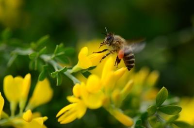 ミツバチ ときどき*カメラ