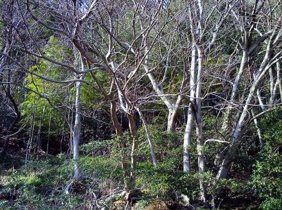 木々 ときどき*カメラ