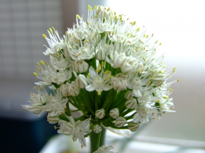 こんな花なんですね