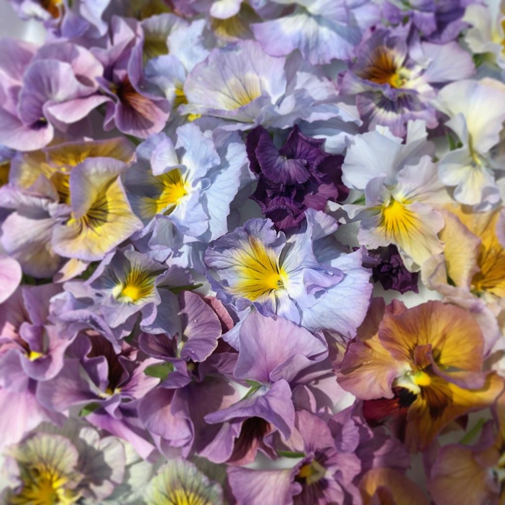 エディブルフラワー パンジー flower