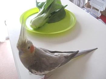 らでぃっしゅぼーや野菜