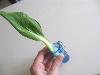 らでぃっしゅぼーや野菜3