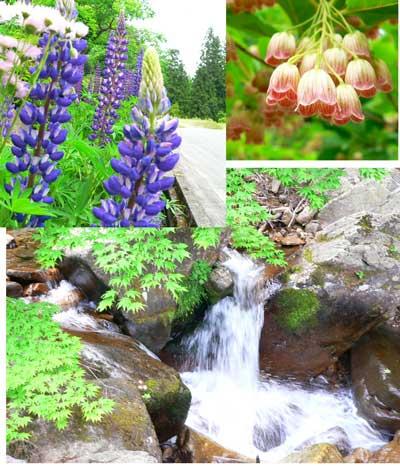 県立自然公園  宇津江四十八滝