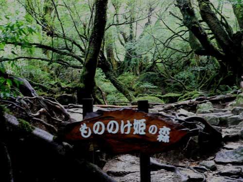 屋久島 もののけ姫の森