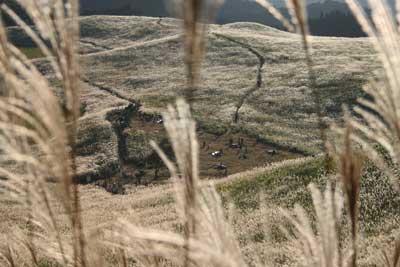 曽爾高原のススキ 2