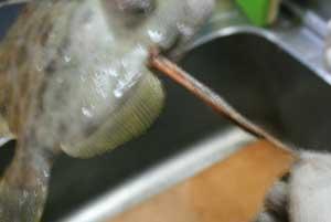 カワハギの料理