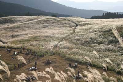 曽爾高原2008