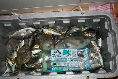 紀州の釣り
