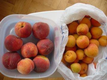お庭のフルーツ1