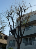 街路樹も冬支度