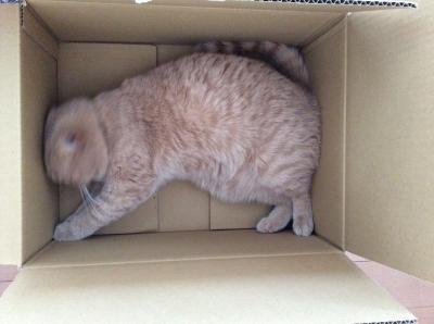 i love box1