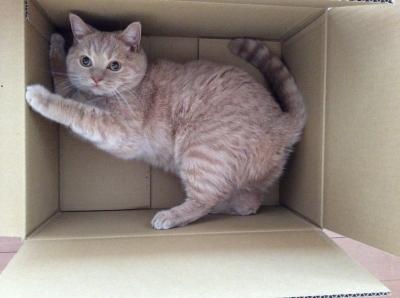 i love box3