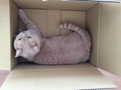 i love box4
