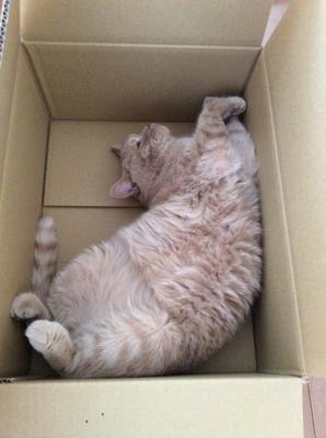 i love box5