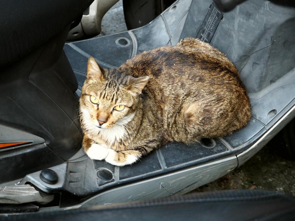 師大路の猫