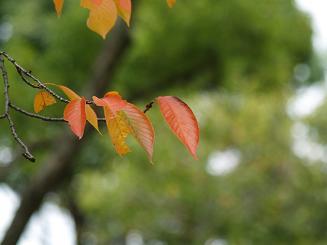 葉っぱはすっかり秋でした