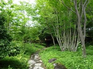 soufuan2.jpg