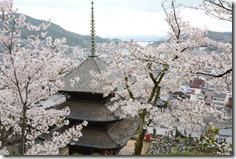 尾道天寧寺の桜」