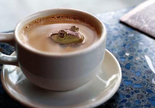 かえるの日コーヒー