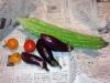 111109まだ採れる野菜