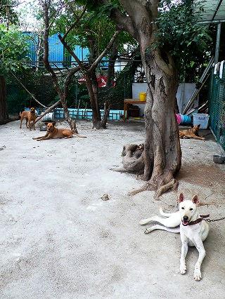 AnimalsTaiwan