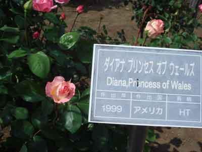 daiana4