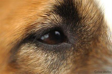 ジャックの目