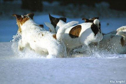 ジャックと雪1
