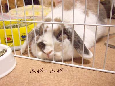 20080125_1.jpg