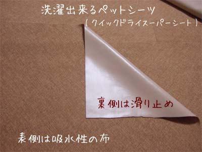 20080210_1.jpg