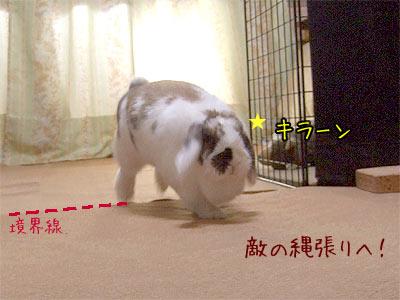 20080211_2.jpg