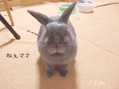 20081007_1.jpg