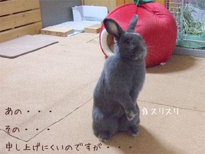 20081031_5.jpg