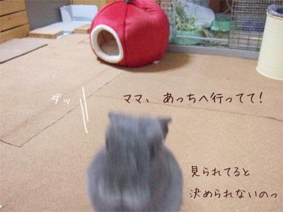 20081031_6.jpg