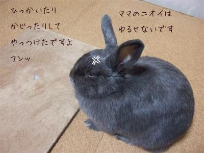 20081104_4.jpg