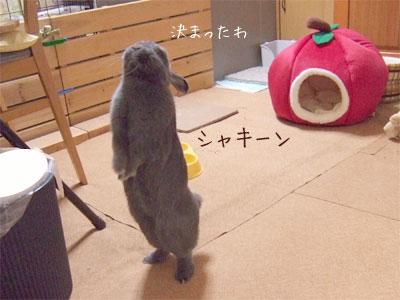 20081110_2.jpg