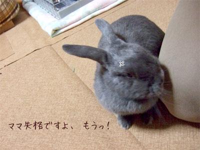 20081121_3.jpg