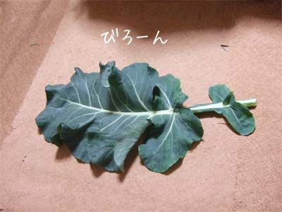 20081205_3.jpg