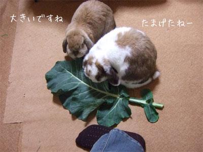 20081205_4.jpg