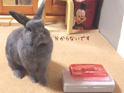 20090628_3.jpg