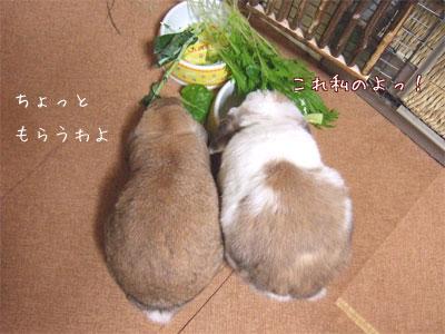 20090921_4.jpg